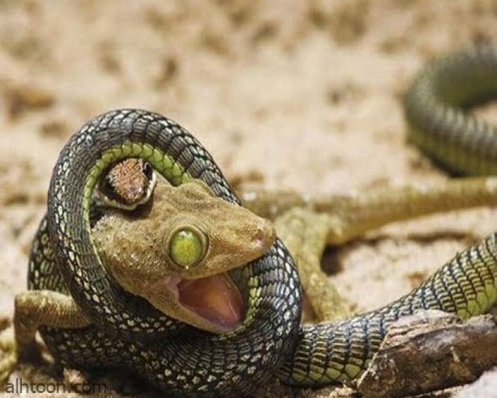شاهد صور طريفة جميلة ومضحكة -صحيفة هتون الدولية