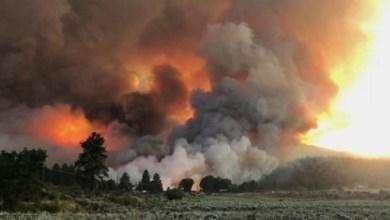 شاهد: حرائق تجتاح الغابات الأسترالية - صحيفة هتون الدولية