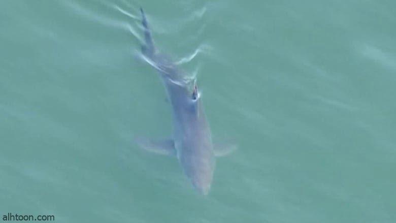 شاهد: أسماك قرش تسبح أسفل مرتادي شاطئ - صحيفة هتون الدولية