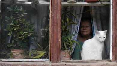 شاهد: امرأة تنقذ طفل - صحيفة هتون الدولية