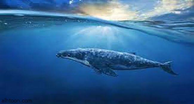 قصة ( الحوت لولا )