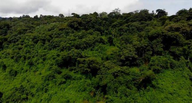 """السياحة في غابة """"يايو"""""""