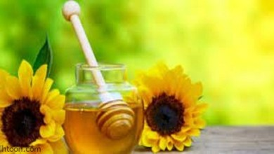 عسل عباد الشمس وفوائده -صحيفة هتون الدولية