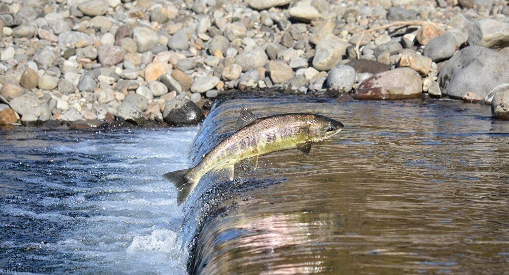 لحظة قيام سمكة بمحاولة قطع طريق - صحيفة هتون الدولية