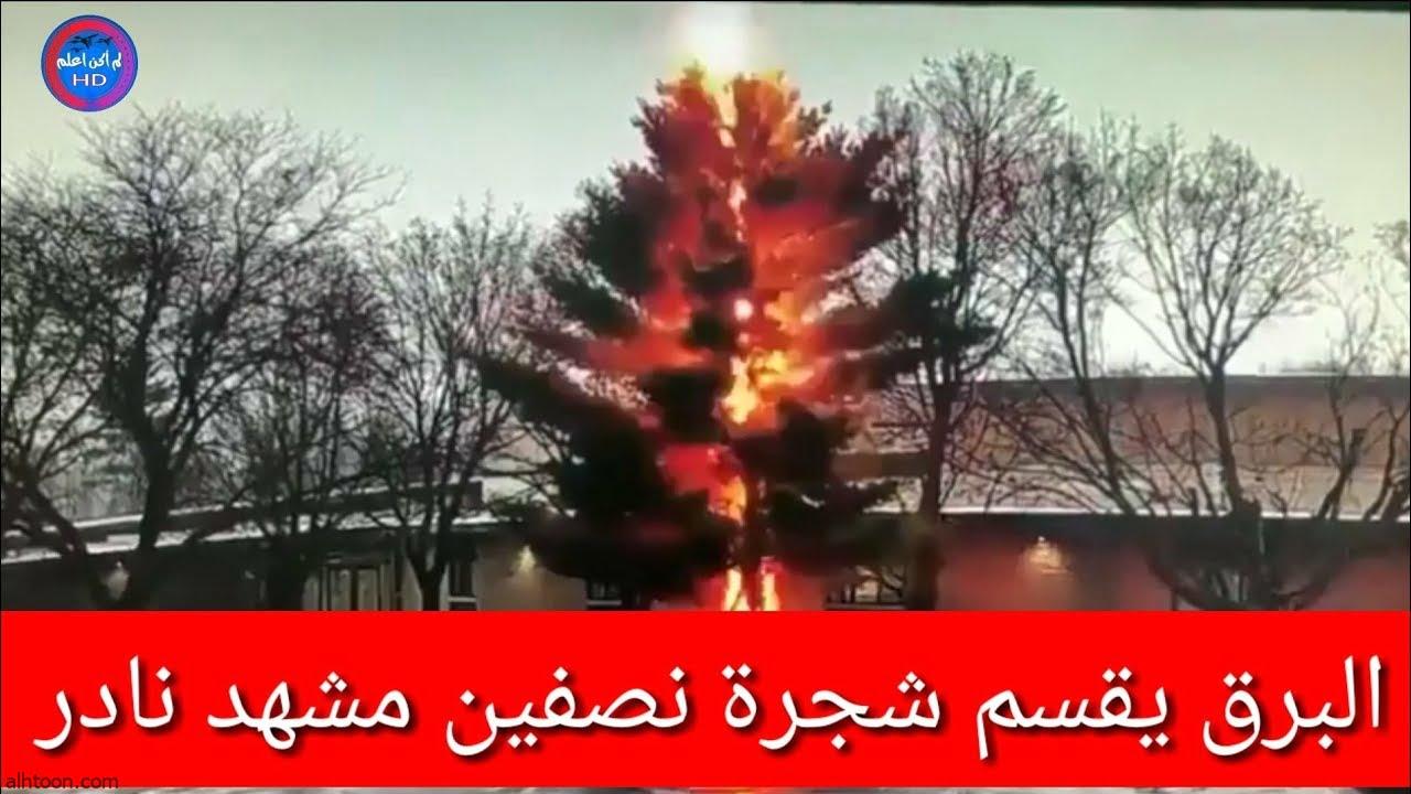 شاهد: برق يقسم شجرة إلى نصفين - صحيفة هتون الدولية