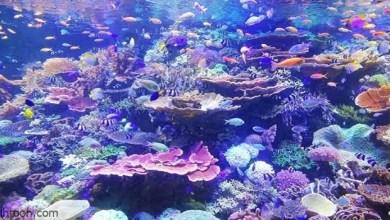 افتتاح معرض فنيّ تحت الماء في قبرص