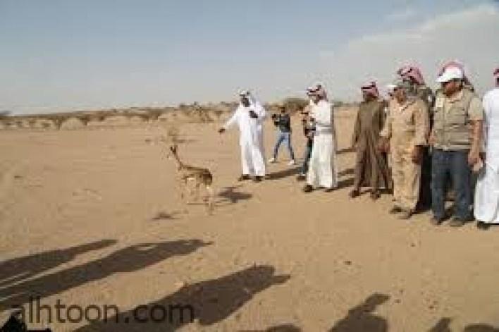 محازة الصيد أفضل محمية برية في الخليج -صحيفة هتون الدولية