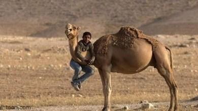 صور غريبة جدا مضحكة ورائعة -صحيفة هتون الدولية-