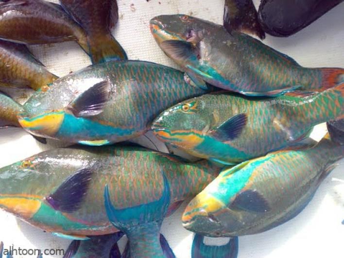 محمية جزر فرسان محمية طبيعية للطيور النادرة -صحيفة هتون الدولية