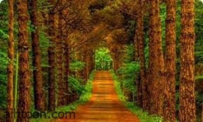 شاهد الغابات الأجمل في العالم -صحيفة هتون الدولية