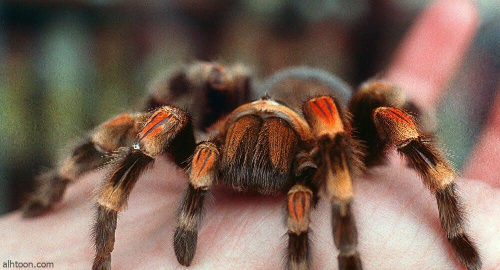 شاهد: هندسة عنكبوت في نسج خيوطه - صحيفة هتون الدولية
