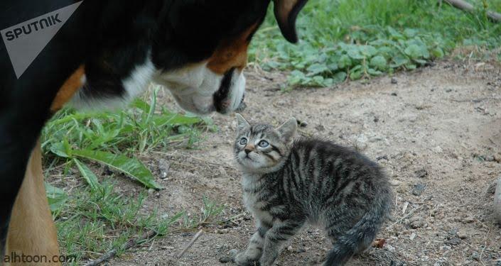 شاهد: كلب يطارد قط - صحيفة هتون الدولية