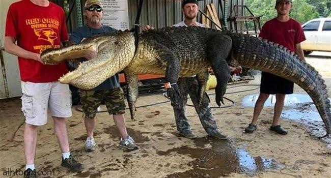 في بطن تمساح اختراع يعود لآلاف السنين -صحيفة هتون الدولية-