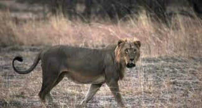 """""""القائمة الحمراء"""" للأنواع المهددة بالانقراض -صحيفة هتون الدولية-"""