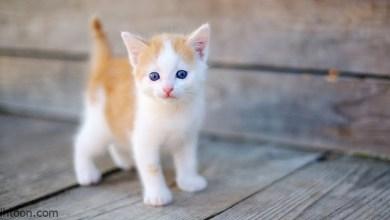 قصة ( القطة سارقة الحليب )