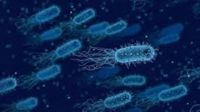 الاردن تكشف تطورات انتشار جرثومة شيغيلا -صحيفة هتون الدولية