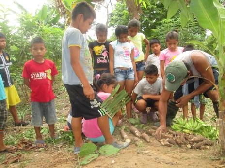 mostrando los yucas a los niños