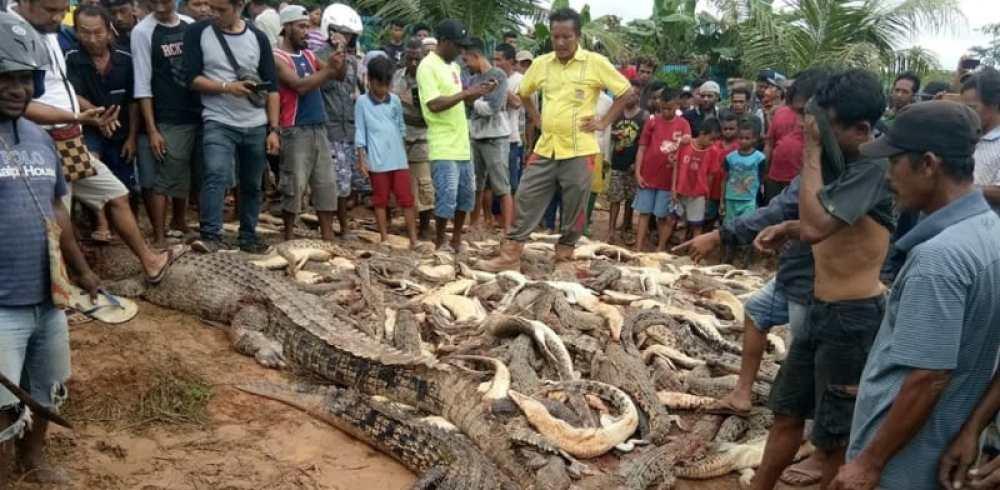 Image result for pembantai buaya