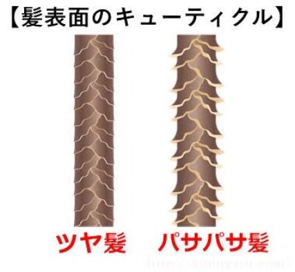 髪の表面のキューティクル