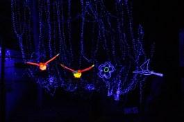 Spectacular - Illuminasia - Calgary Zoo
