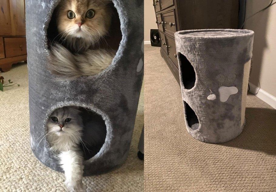big cat house