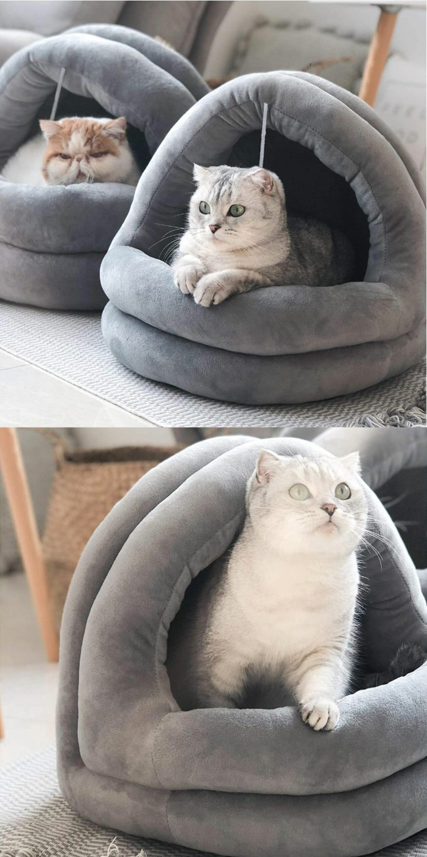 cat bed best