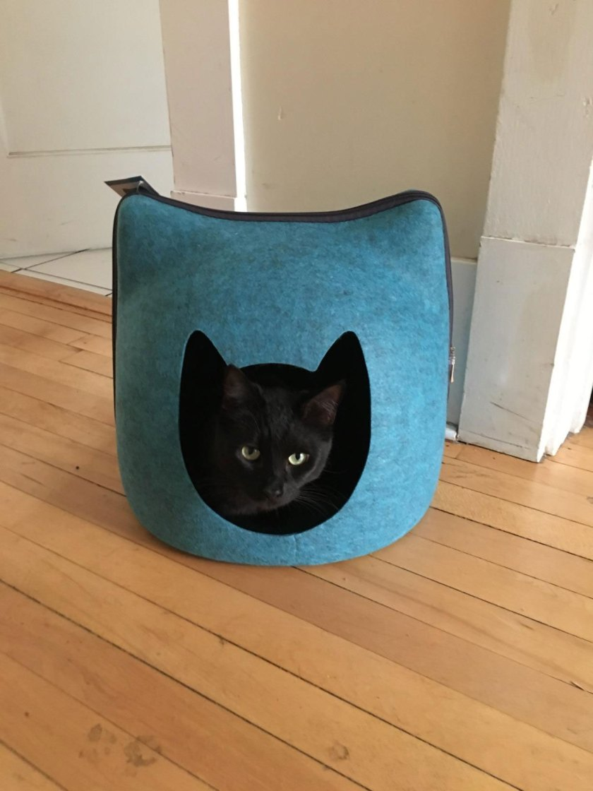 cat house heating