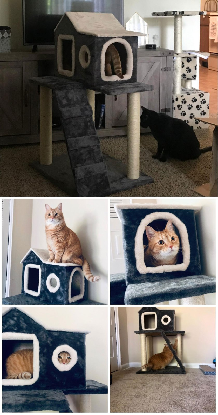 funny cat house