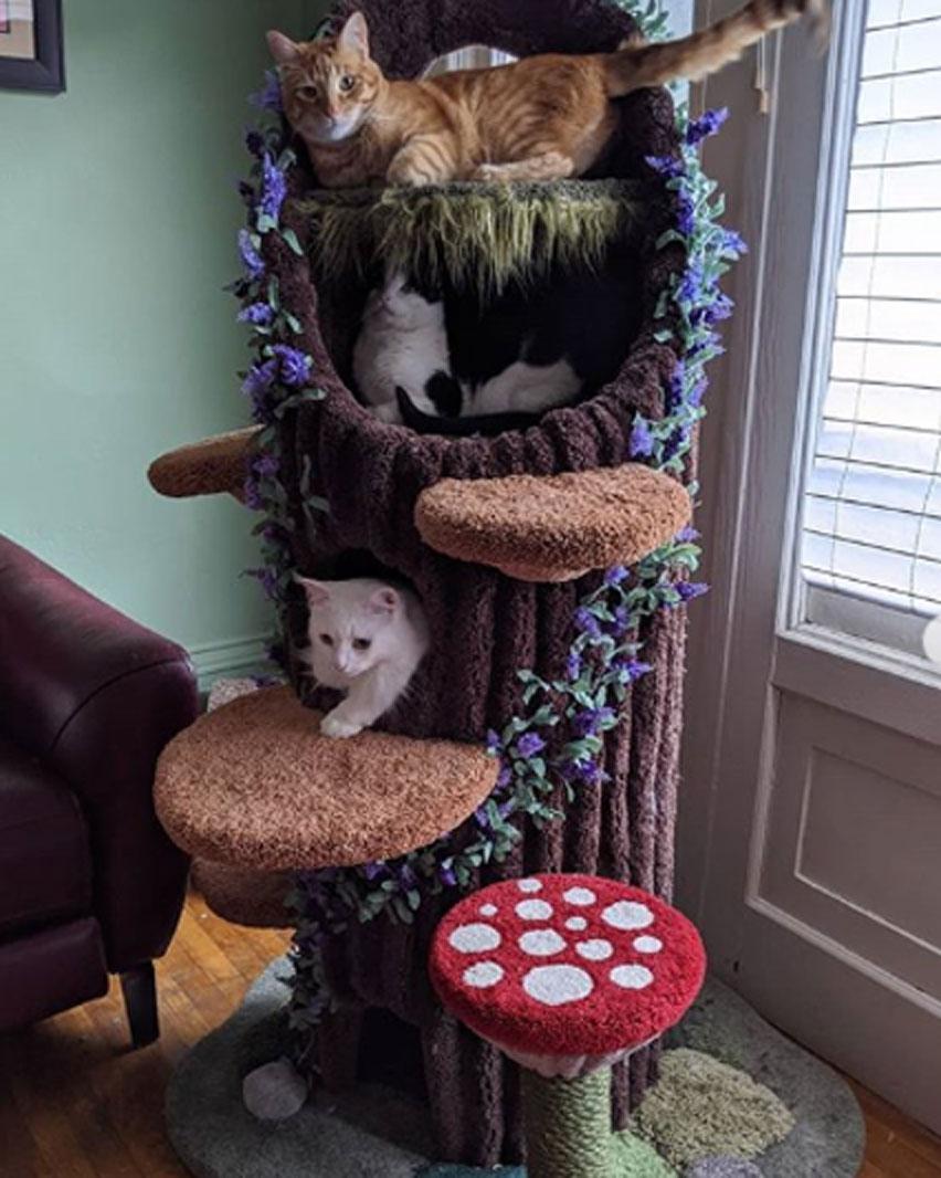 unique cat tree with mushroom