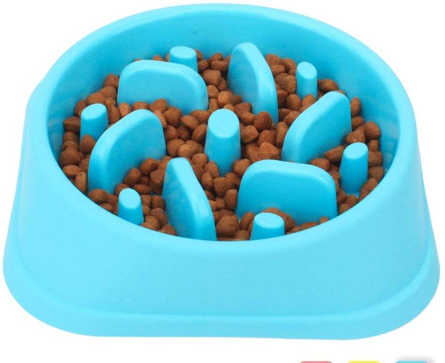 cat bowl 2020