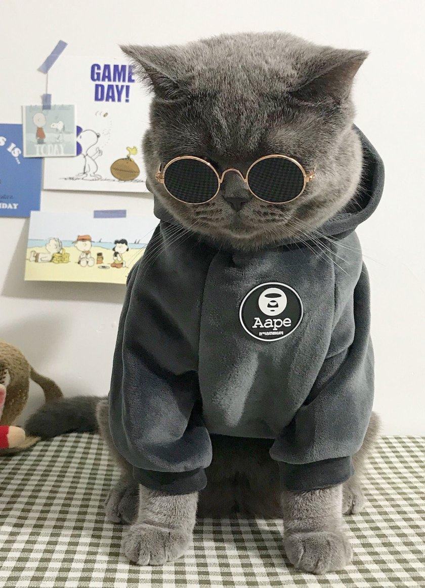 cat costume pets