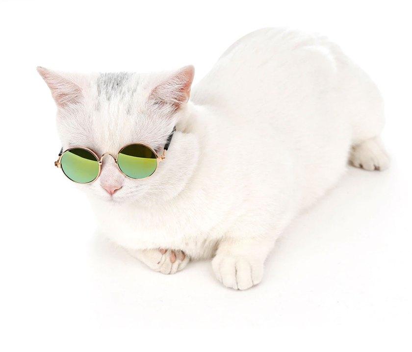 cheap cute cat costume