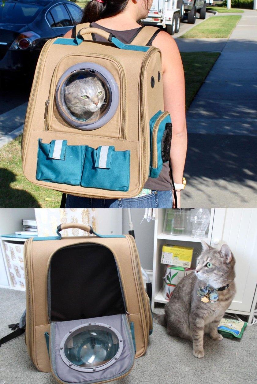 Cute cat backpack