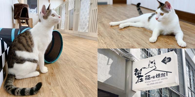 【貓咪住宿】超美貓咪旅館!!!台南唯一透明天空步道貓咪旅館《都在貓咪旅館》 |貓咪安親| |貓咪旅店|