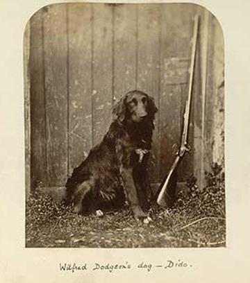 Charles Dodgson portrait of dog