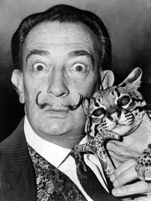 Dali and feline are friends