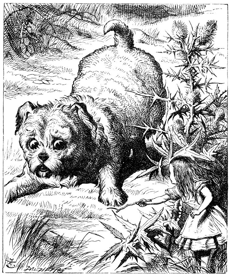 Alice in Wonderland puppy