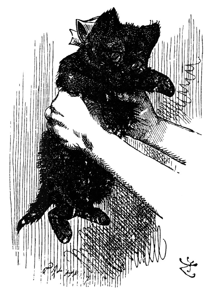 Alice shakes the black kitten