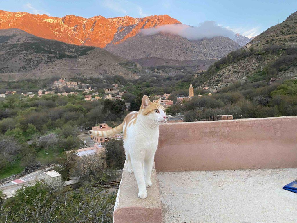 corona cat's view
