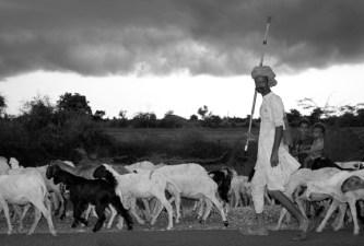shepherd-man-india