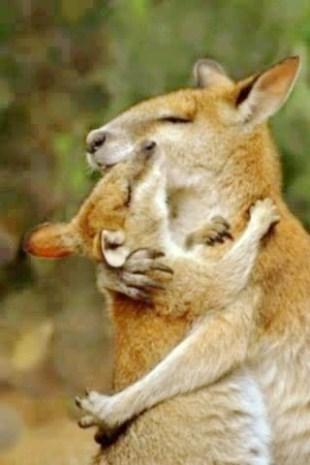 Kangaroos - Babies and mom ]010