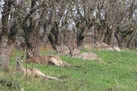 Kangaroos - Crowd or mob 001