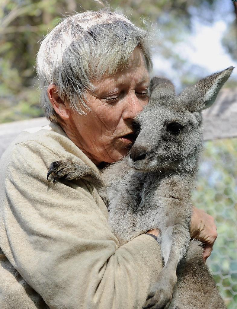 Kangaroos - Human 04