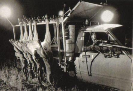 Kangaroos - Killed in trucks and storage 019
