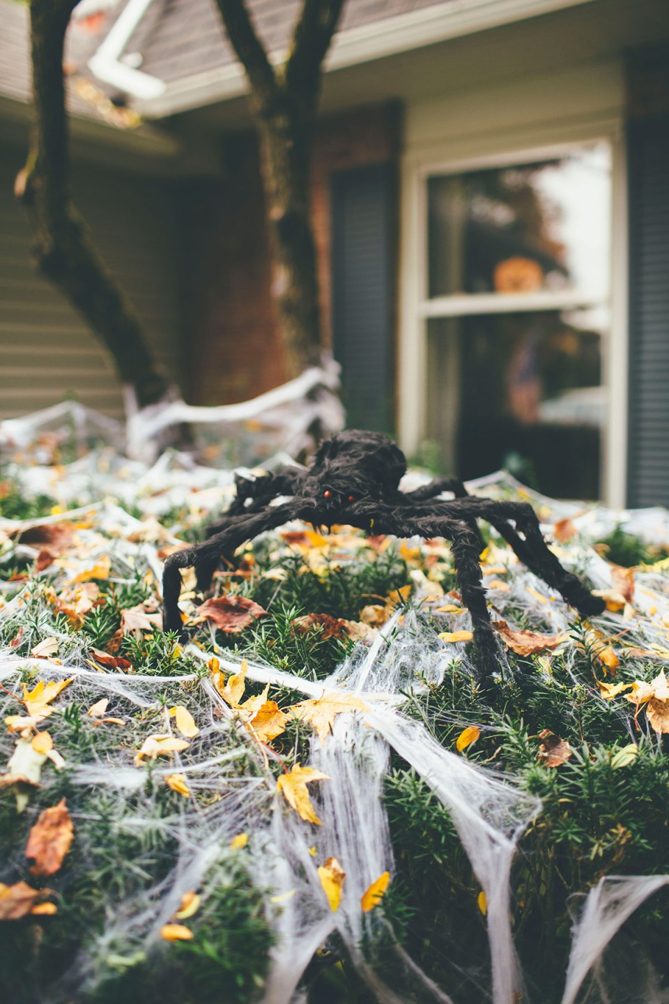 Large Furry Outdoor Spider on Cobweb Covered Bushes