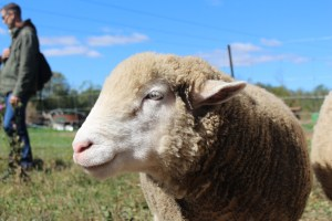 Wishing Well Animal Sanctuary | Bradford Ontario