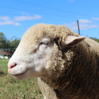 Wishing Well Animal Sanctuary   Bradford Ontario