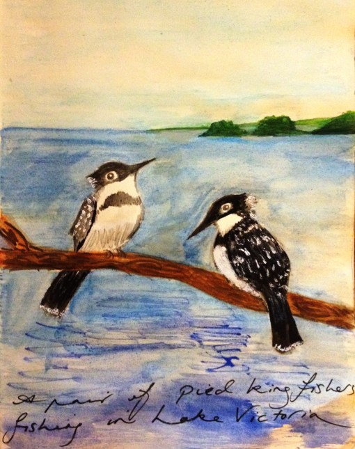 Pied Kingfishers on the banks of Lake Victoria, Mwanza, Tanzania.