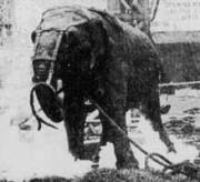 electrocuting-an-elephant