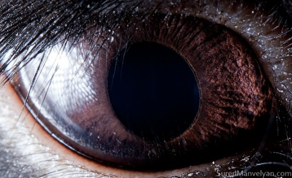 Animal-Eyes-Rabbit-634x387